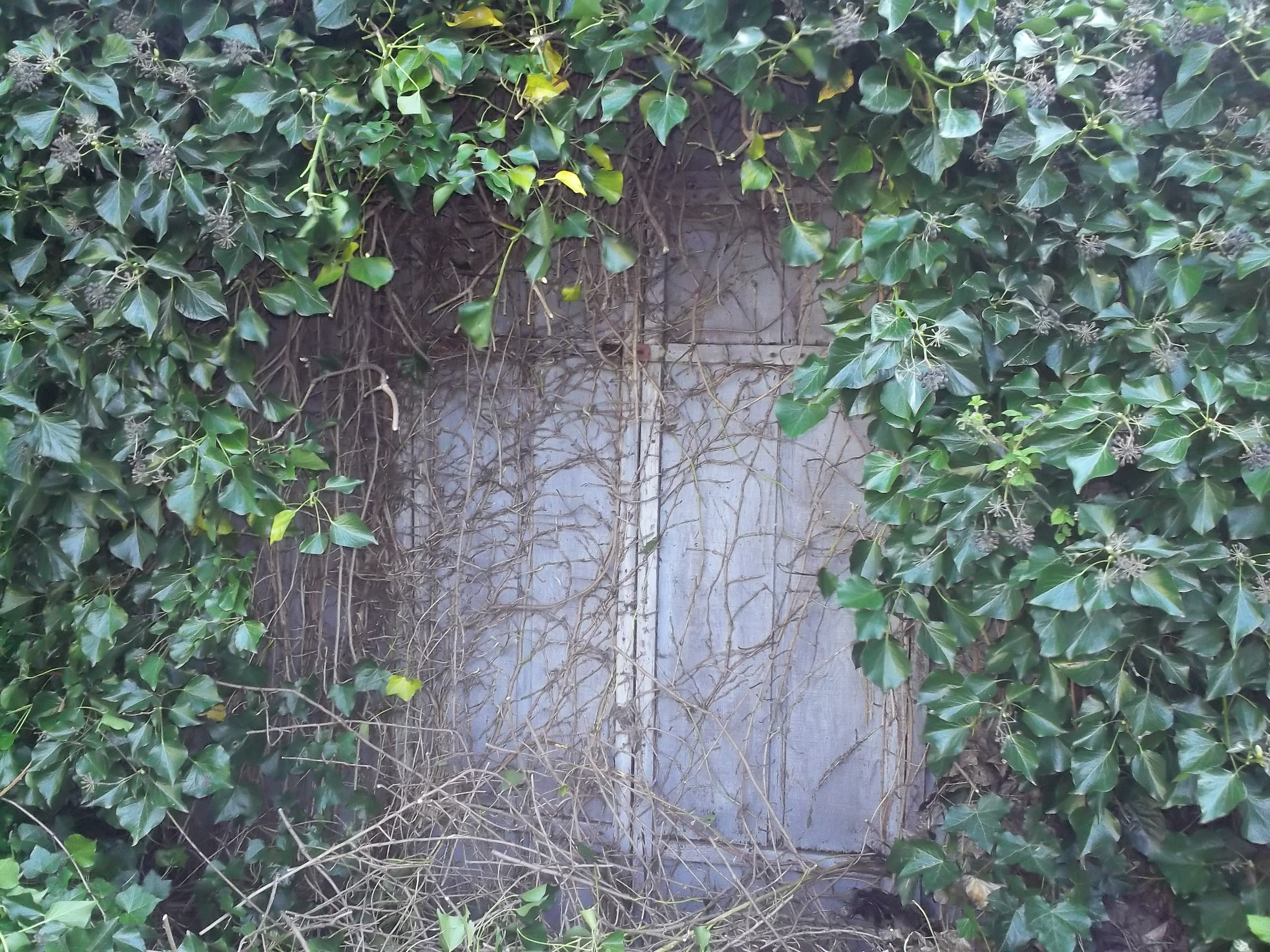 The Secret Building (Part 1: That's No Berry Bush!)